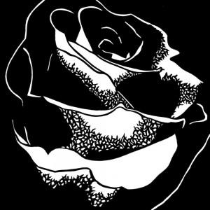 Ruth Bühlmann: Rose, 2004,18x18cm